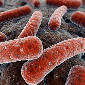 Microbiology_420x420_Mycobacterium_tuberculosis_14313982